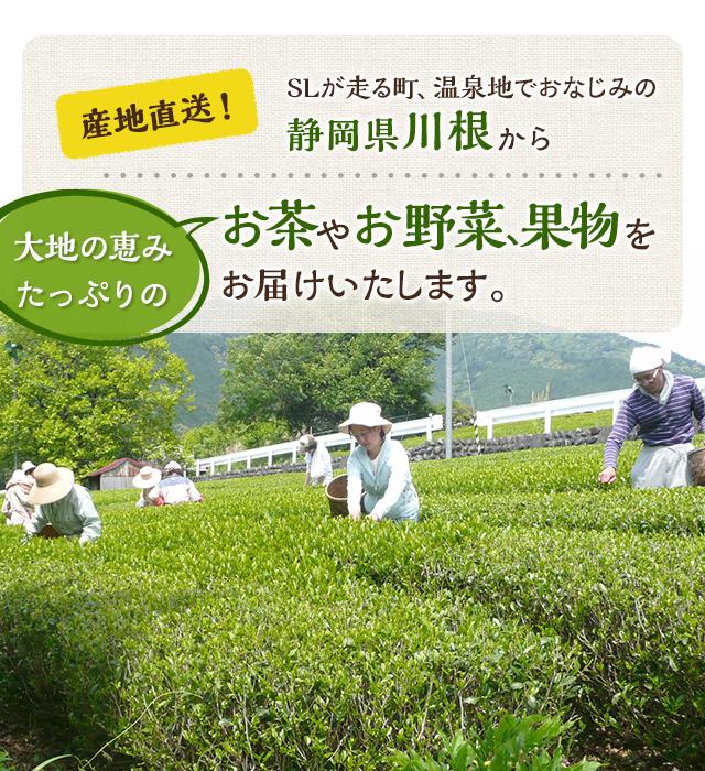 産地直送!SLが走る町、温泉地でおなじみの「静岡県川根」から「大地の恵み」たっぷりのお茶やお野菜、果物をお届けいたします。